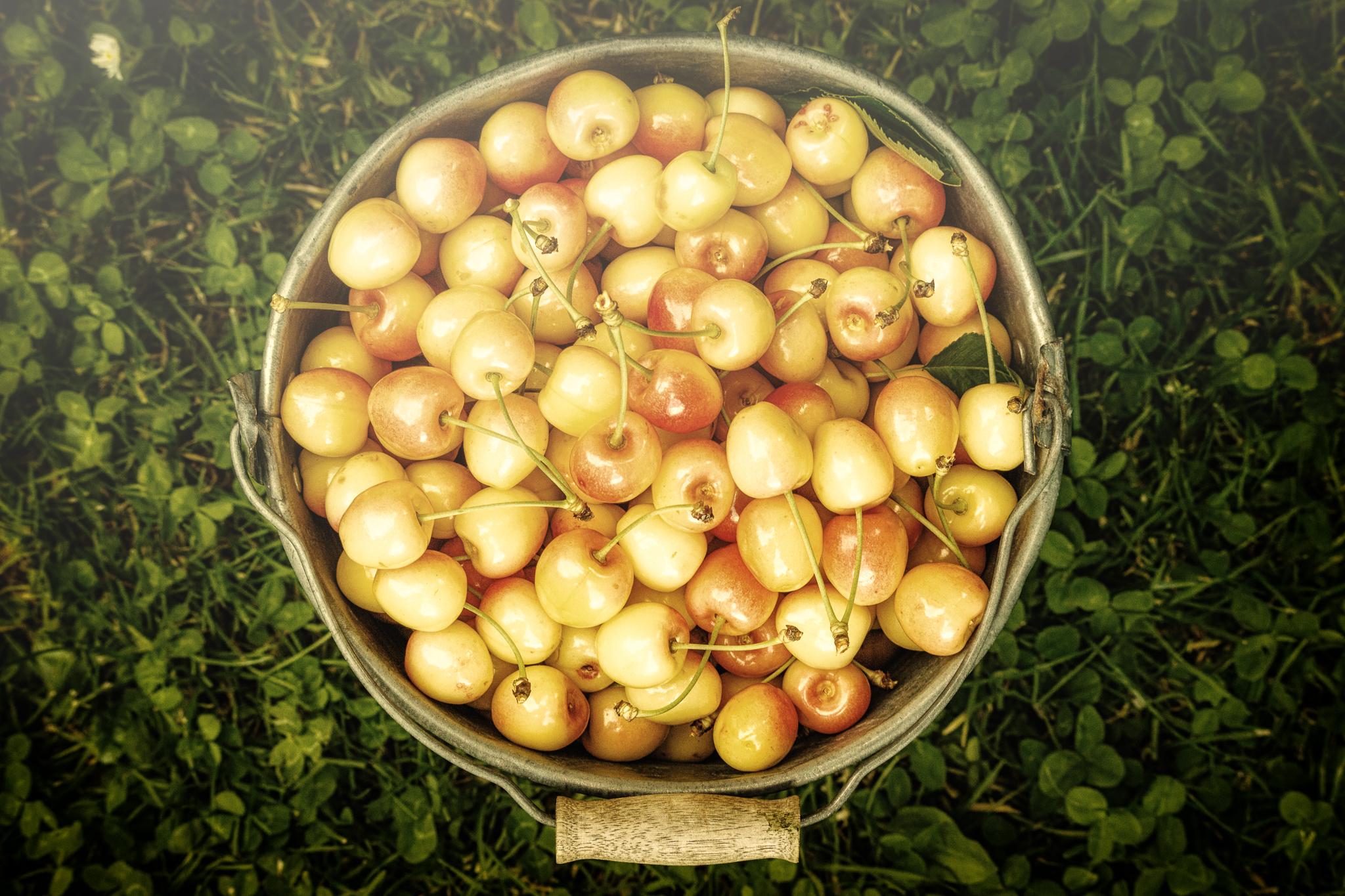 Ein Eimer voll Kirschen.