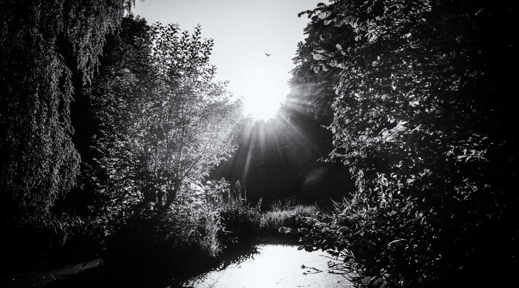 Sonnenstrahlen und ein Vogel.