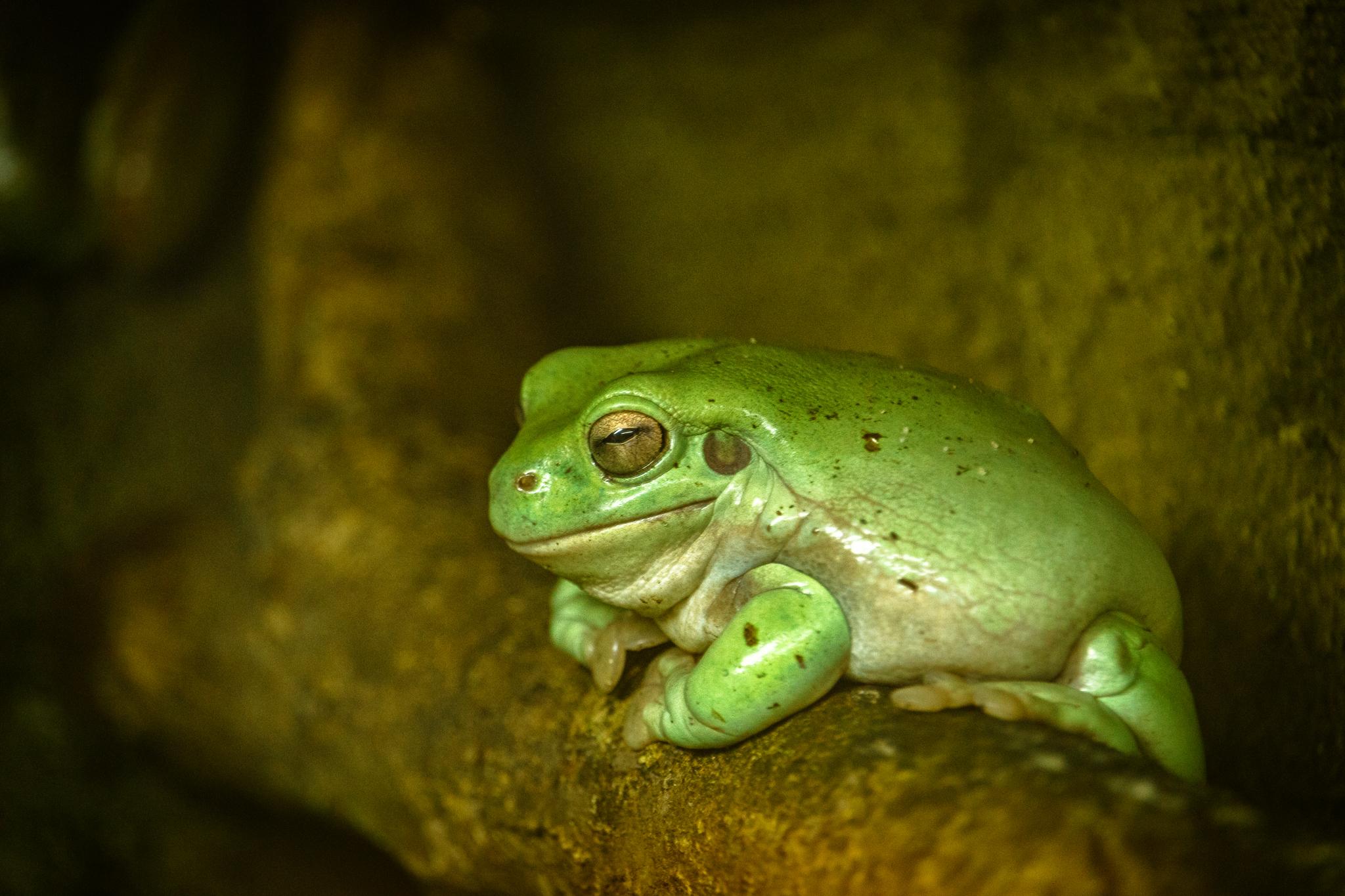 Frosch-Meditation