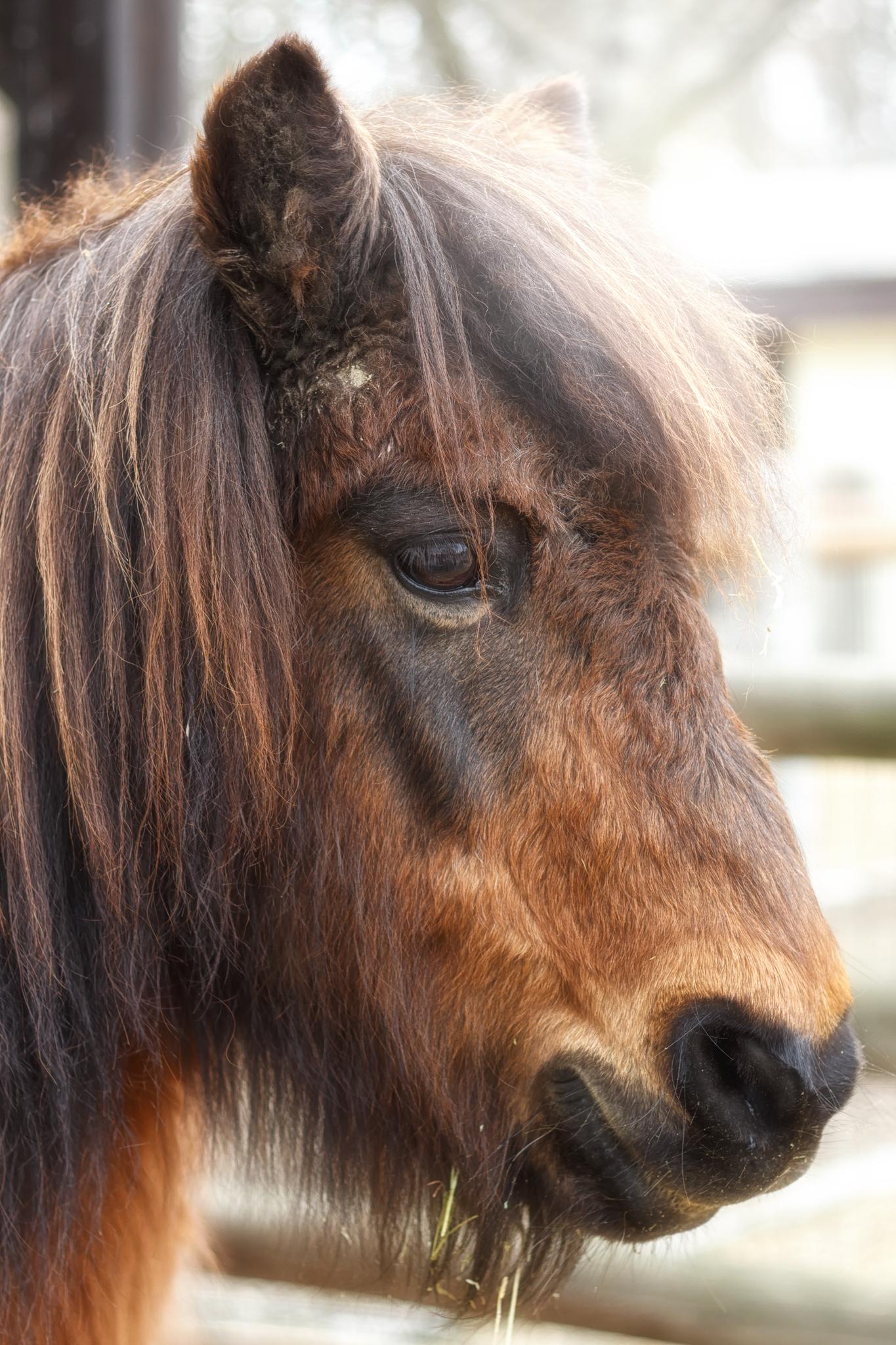 Pony Ronny.