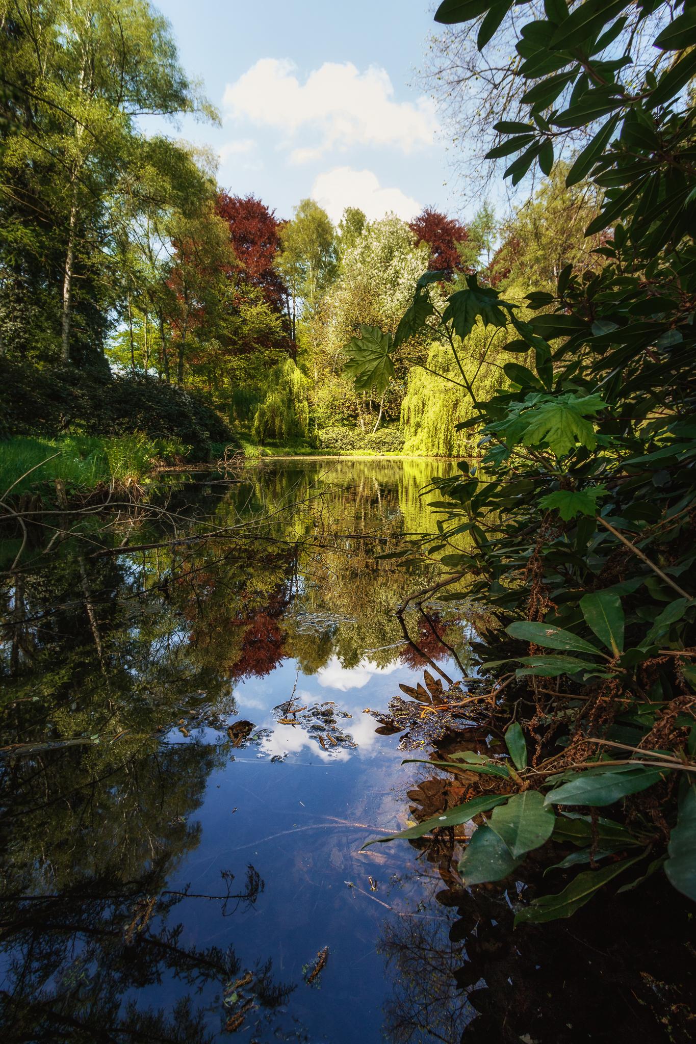 Der Teich im Ölberggarten.
