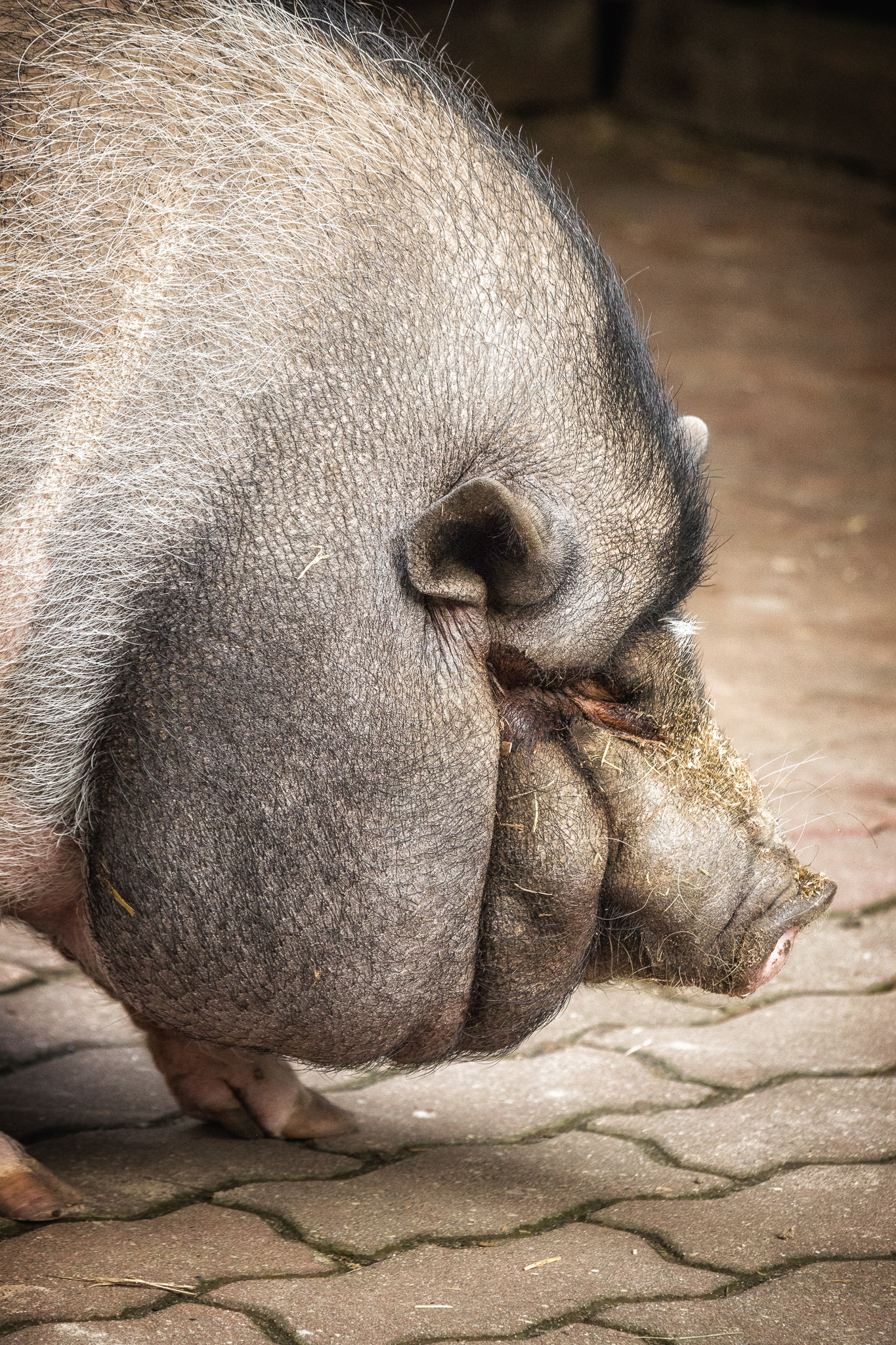 Schweinebacke.