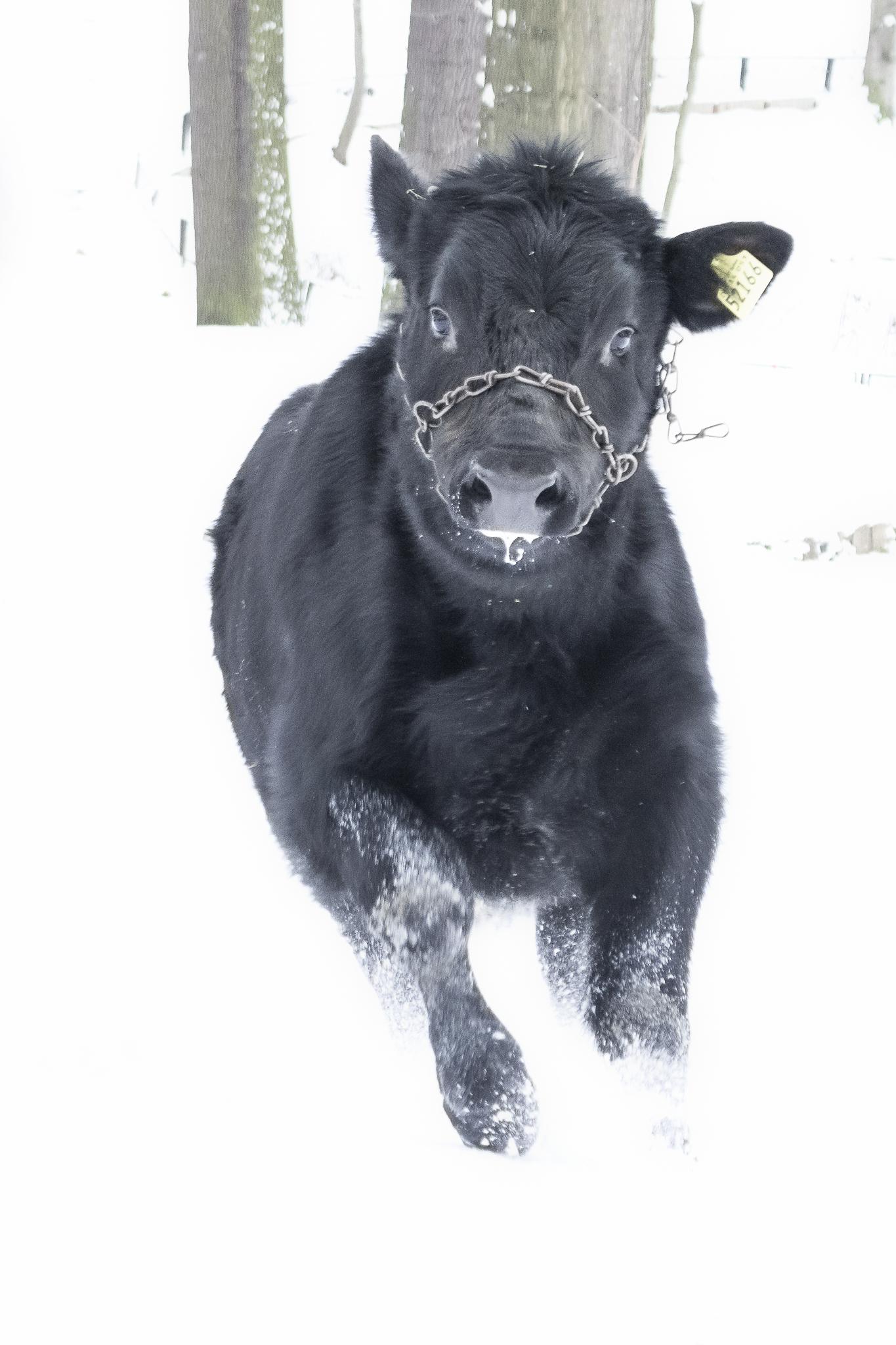 Theo der Schneewalzer.