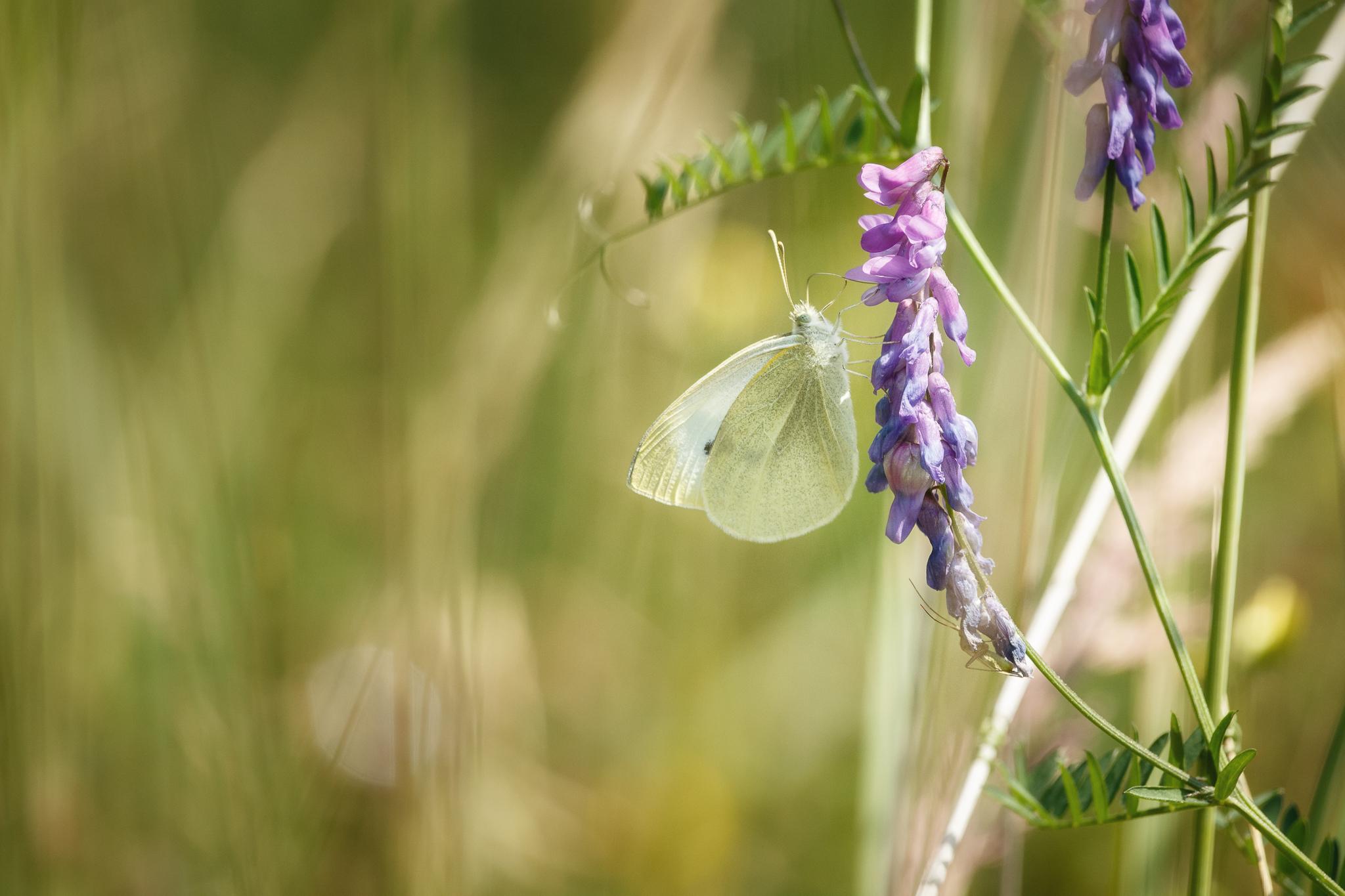 Schmetterling & Spinne.