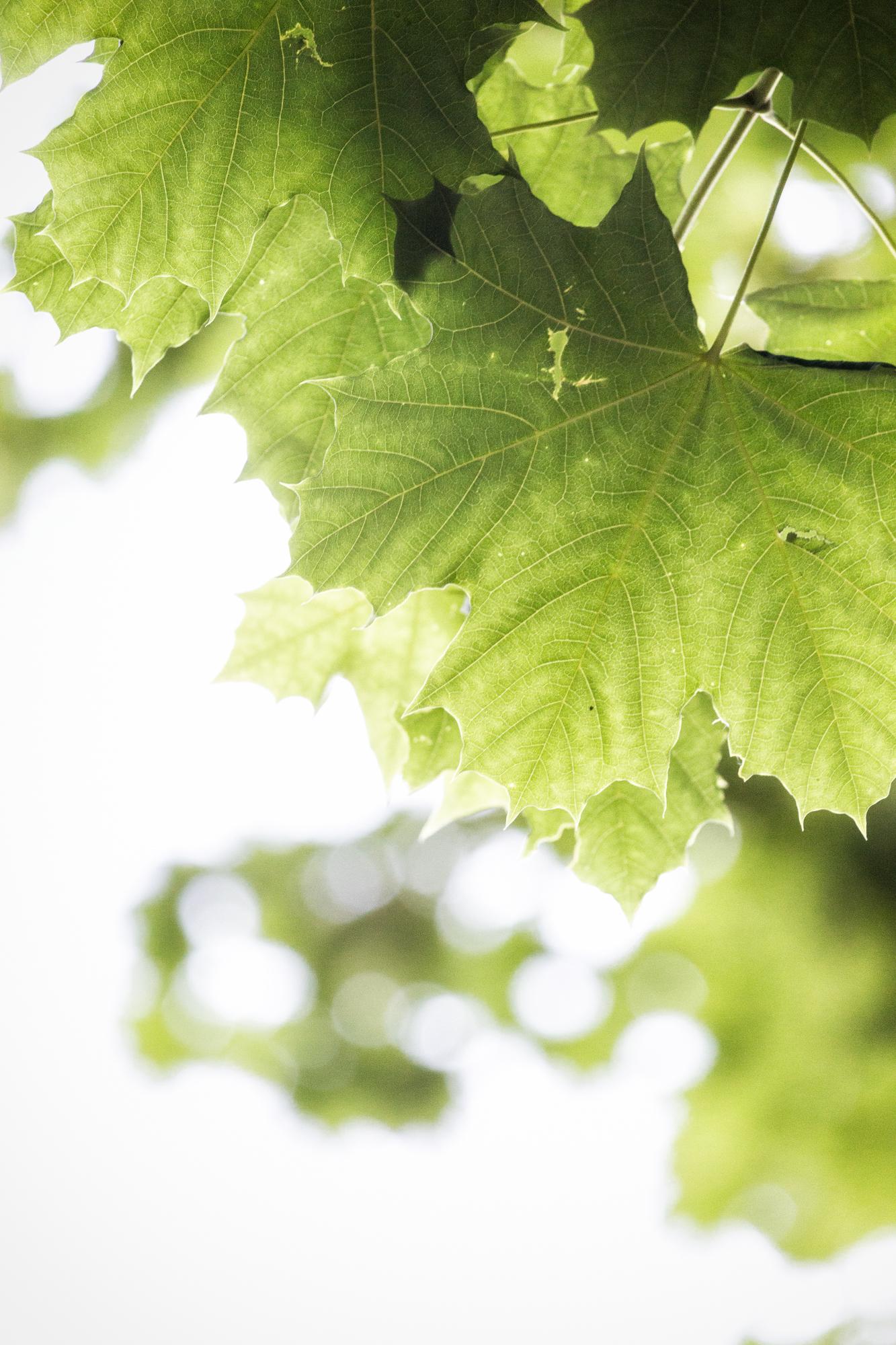 Blätterdach.