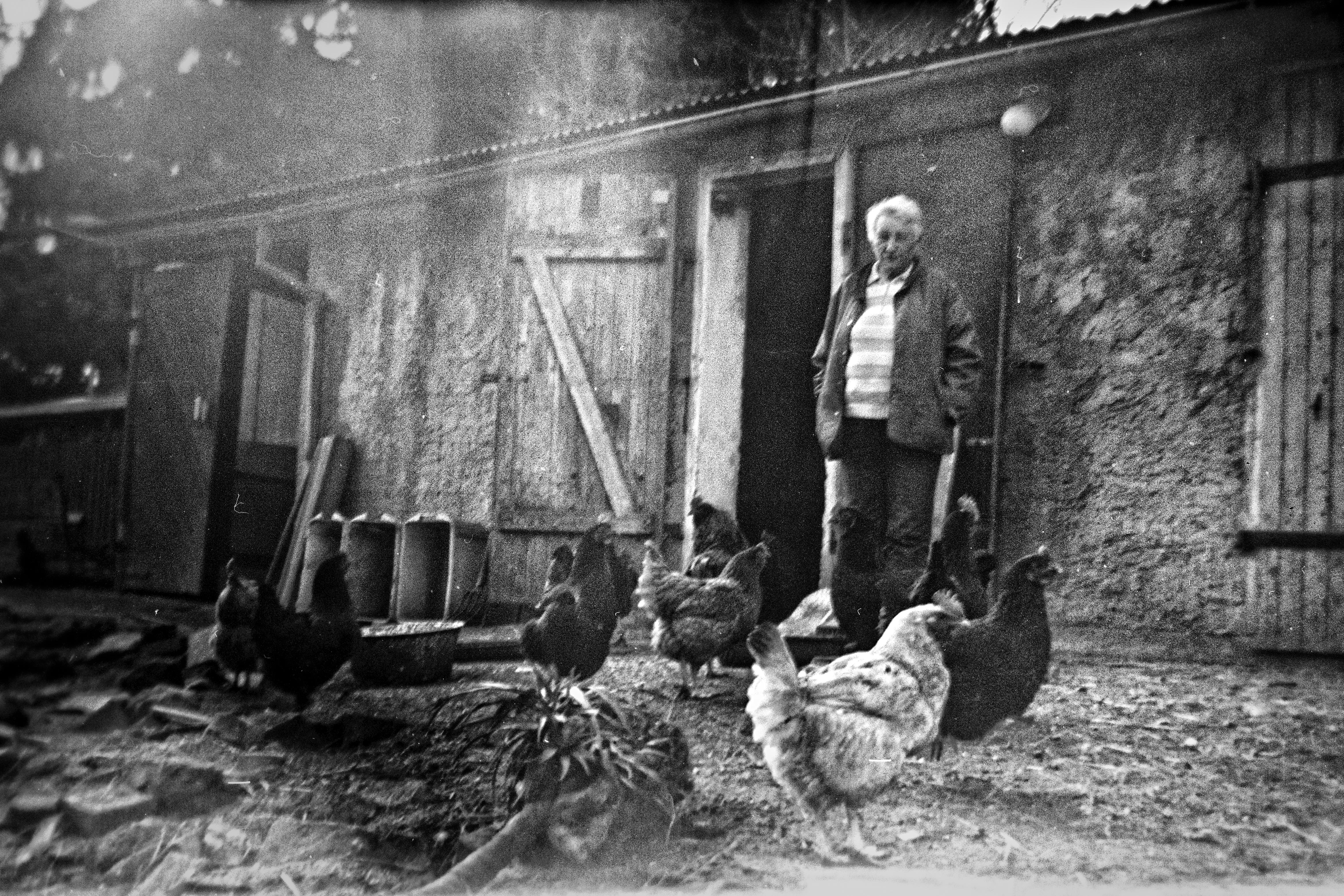Der Hühnergarten.