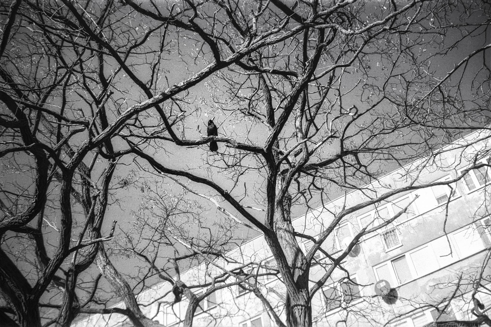 Krähe im Baum.