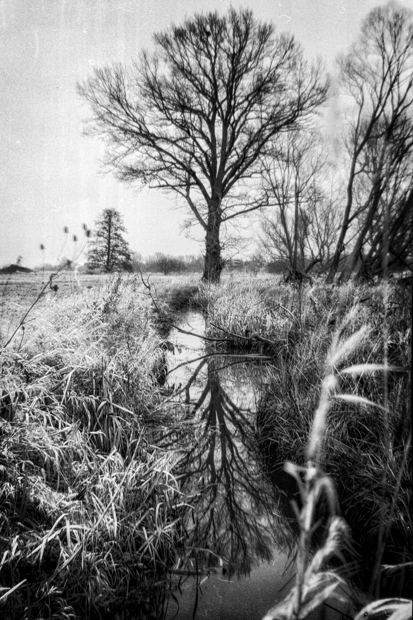 Neißewiesen bei Ludwigsdorf.