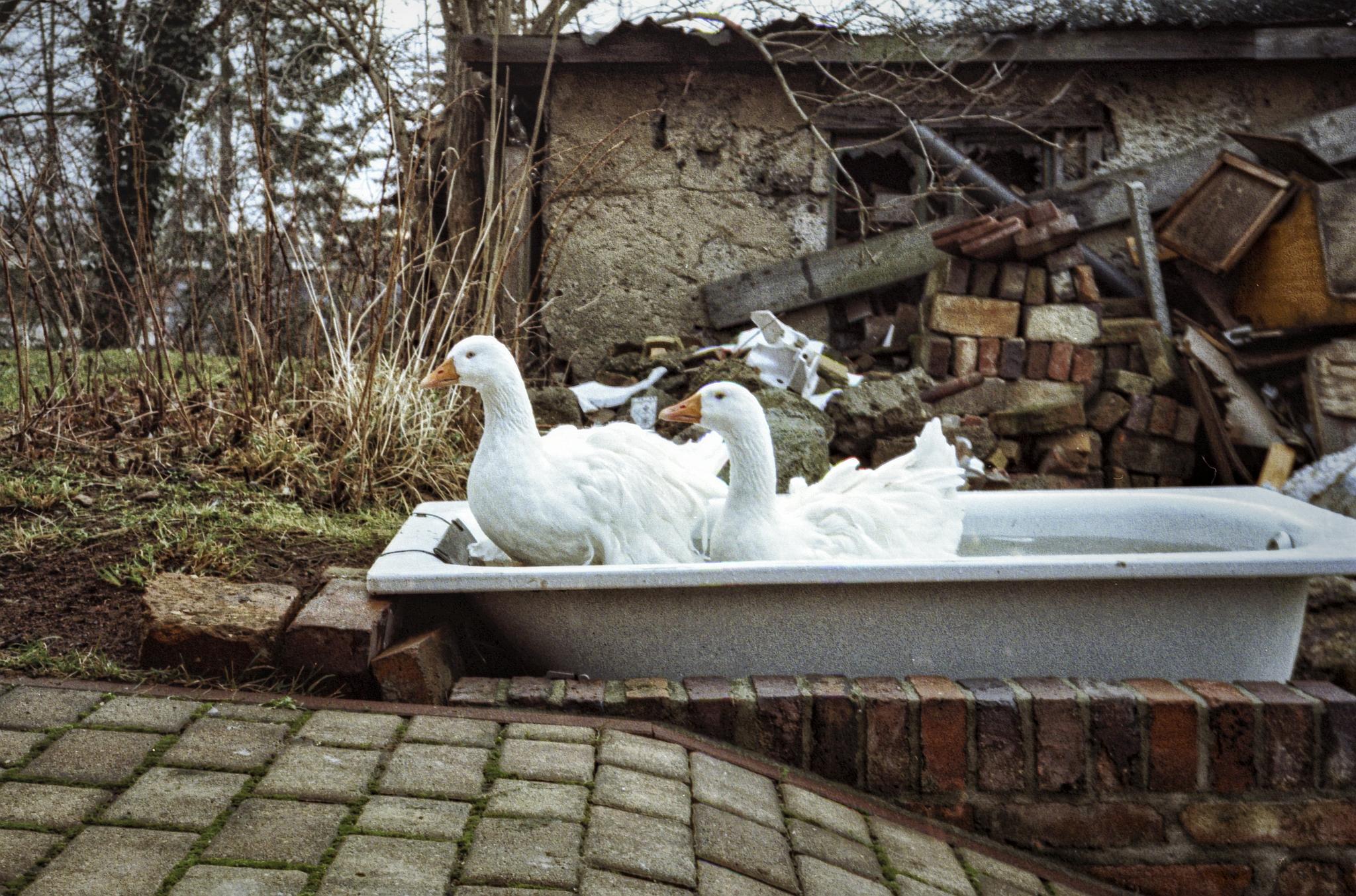 Das Bad ist angerichtet.