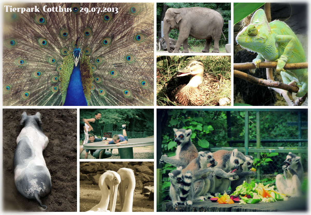Collage Tierpark Cottbus